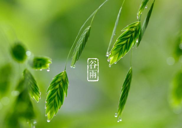 《药师法门》二十四节气养生法——谷雨