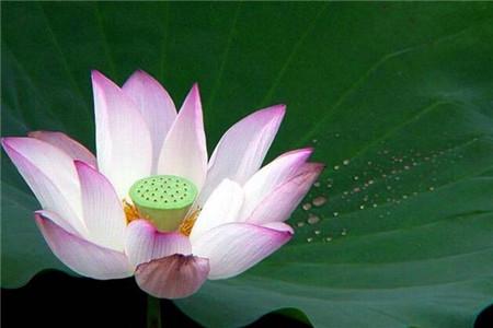 佛教慈善事业与布施法门