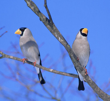 鸟类放生注意事项