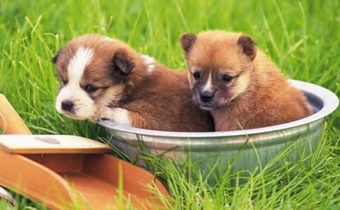 家里养的宠物能放生吗?