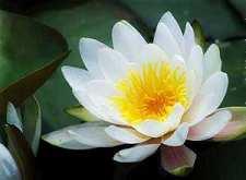 鼓是如何被引入佛教中的?