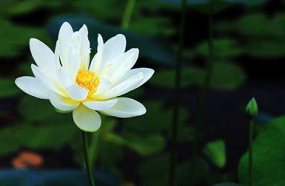 宝箧印陀罗尼咒藏传版